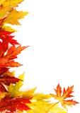 Der gefallene Herbst färbte Blätter Stockbild