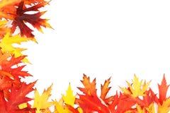 Der gefallene Herbst färbte Blätter Lizenzfreies Stockbild
