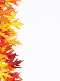 Der gefallene Herbst färbte Blätter Stockfotos
