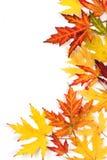Der gefallene Herbst färbte Blätter auf weißem Hintergrund Lizenzfreie Stockfotos