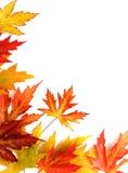 Der gefallene Herbst färbte Blätter auf weißem Hintergrund Lizenzfreies Stockbild