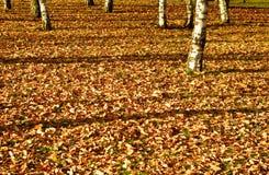 Der gefallene Herbst lässt Hintergrund Lizenzfreie Stockbilder