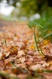 Der gefallene Herbst lässt Hintergrund Stockfotos