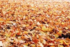Der gefallene Herbst lässt Hintergrund Stockbilder