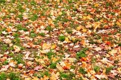 Der gefallene Herbst lässt Hintergrund Stockfoto