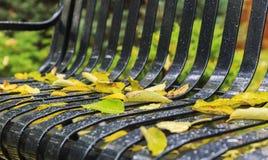 Der gefallene Herbst verlässt mit Tropfen des Regens auf einer Parkbank Stockfotos