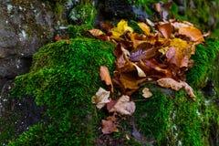 Der gefallene Herbstlaub auf dem grünen Moos Lizenzfreie Stockfotos
