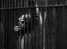 Der Gefangene Lizenzfreies Stockbild