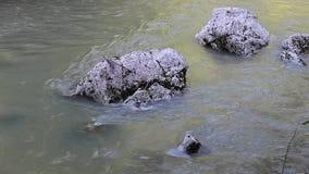 Der gegenwärtige Fluss und die Steine stock video