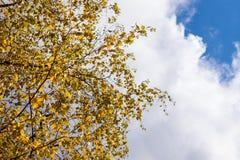 der gelbe Herbst und das Rot verlässt gegen den blauen Himmel Stockbilder