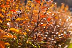 der gelbe Herbst und das Rot verlässt gegen den blauen Himmel Lizenzfreie Stockbilder