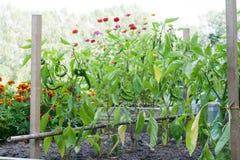 Der Gemüsegarten Stockfotografie