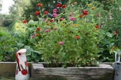 Der Gemüsegarten Lizenzfreie Stockbilder
