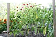 Der Gemüsegarten Lizenzfreies Stockfoto