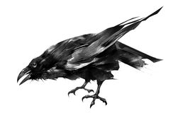 Der gemalte Vogel ist ein Rabe, der auf einem weißen Hintergrund sitzt lizenzfreie abbildung