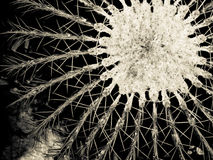 Der geometrische Kaktus Lizenzfreie Stockfotos