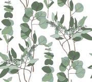 Der gesäte Eukalyptus, silberner Dollar, Babyblaubaum verlässt nahtloses Muster Stockbild