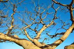 Der getrocknete Baum gegen den blauen Himmel Stockbild