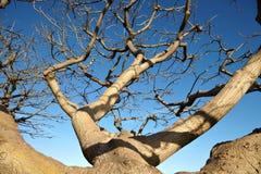 Der getrocknete Baum gegen den blauen Himmel Stockfoto