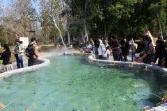 Der Geysir im Norden von Thailand Lizenzfreies Stockbild