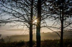 Der glänzende Herbstwald der Sonne Stockfoto