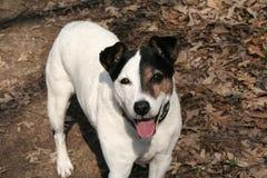 Der glückliche Spaß gehen Lucky Dog Lizenzfreie Stockfotos