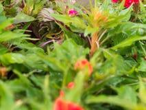 Der goldene Baum-Frosch, der im Garten sich versteckt Lizenzfreie Stockbilder