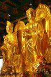 Der goldene Buddha lizenzfreies stockbild