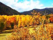 Der goldene Gebirgswald unter dem blauen Himmel Lizenzfreies Stockfoto