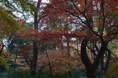 Der goldene Herbst Lizenzfreies Stockfoto