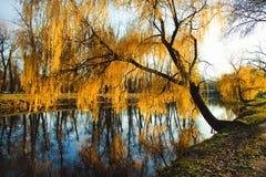 Der goldene Herbst Lizenzfreies Stockbild
