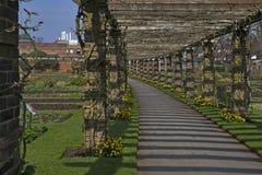 Der GOLDREGEN-BOGEN im QUEENS-GARTEN AN KEW ARBEITET SURREY ENGLAND im Garten Lizenzfreie Stockfotos