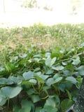 Der grüne Boden Stockfotografie