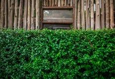 Der grüne Busch mit einem hölzernen Zaun des Eukalyptus hinten mit dem Rost Lizenzfreie Stockfotografie