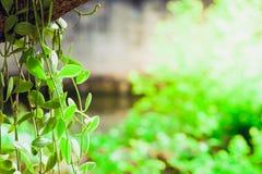 Der grüne Dave-Baum Lizenzfreie Stockfotos
