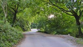 der grüne Heimweg stockfotografie
