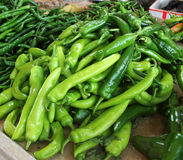 Der grüne Paprika Stockfotografie