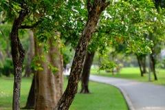 Der grüne Park Stockbilder
