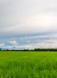 der grüne Reisbauernhof an den Nord-phrae Thailand Stockfotos