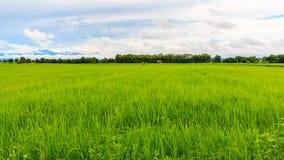 der grüne Reisbauernhof an den Nord-phrae Thailand Lizenzfreies Stockbild