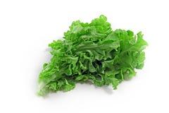 Der grüne Spinat Lizenzfreie Stockfotos