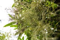Der grüne Wurzelbaum Stockfotos