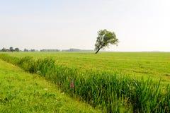 Der Graben, der mit Reedanlagen bedeckt wird, teilt die Wiese diagonal Lizenzfreie Stockbilder