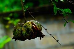 Der Granatapfel ist nicht perfekt, also ist sein Oberteil defekt lizenzfreie stockfotos