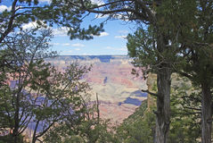 Der Grand Canyon durch die Bäume Lizenzfreies Stockfoto