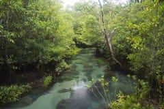 Der Green River bei Krabi Thailand Lizenzfreie Stockfotos