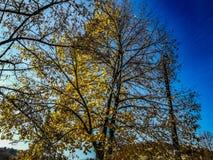 An der Grenze zwischen Frühling und Winter oder ist sonst die Grenze zwischen Leben oder Tod stockfotografie