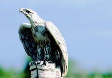 Der große Adler lizenzfreies stockbild