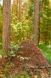 Der große Ameisenhügel im Holz Stockbilder
