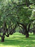 Der große Apfelgarten Lizenzfreies Stockbild